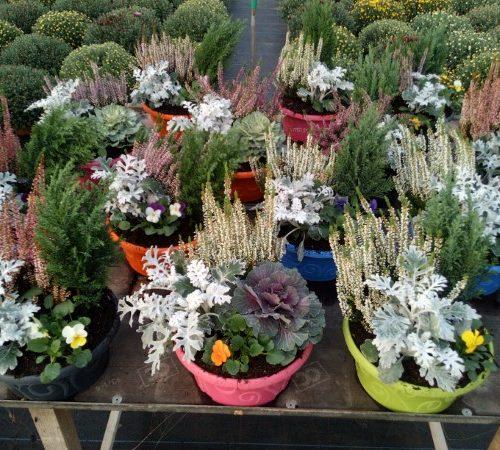LE CHENE FLEURI Ancenis Maine Et Loire 49 Composition De 4 Plantes Variees En Coupe De 23 Cm