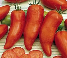 LE CHENE FLEURI Ancenis Maine Et Loire 49 Tomate Greffees Andine Cornue