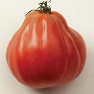 LE CHENE FLEURI Ancenis Maine Et Loire 49 Tomate Greffees Corazon